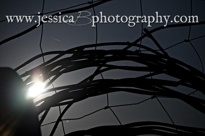 Skywatching: Annular Solar Eclipse 2012