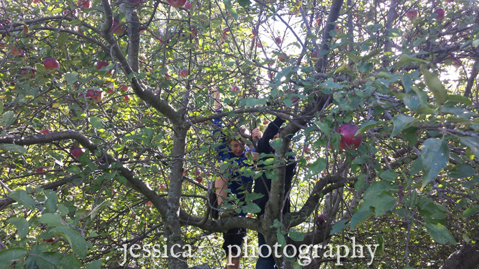 climbing a apple tree