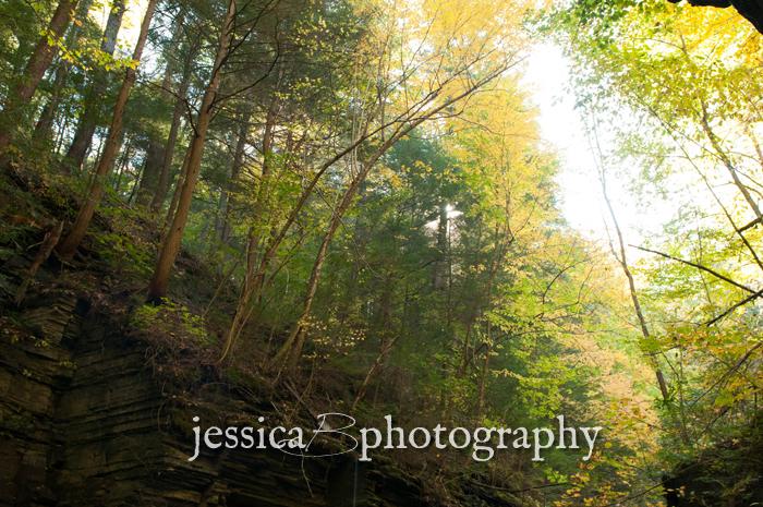 late sun through the trees