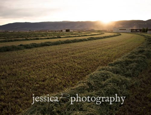 Sunset at the Farm | Utah Landscapes